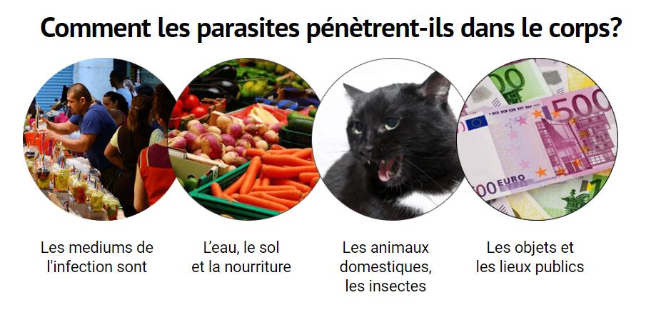 Les parasites les poissons vivant dans le foie