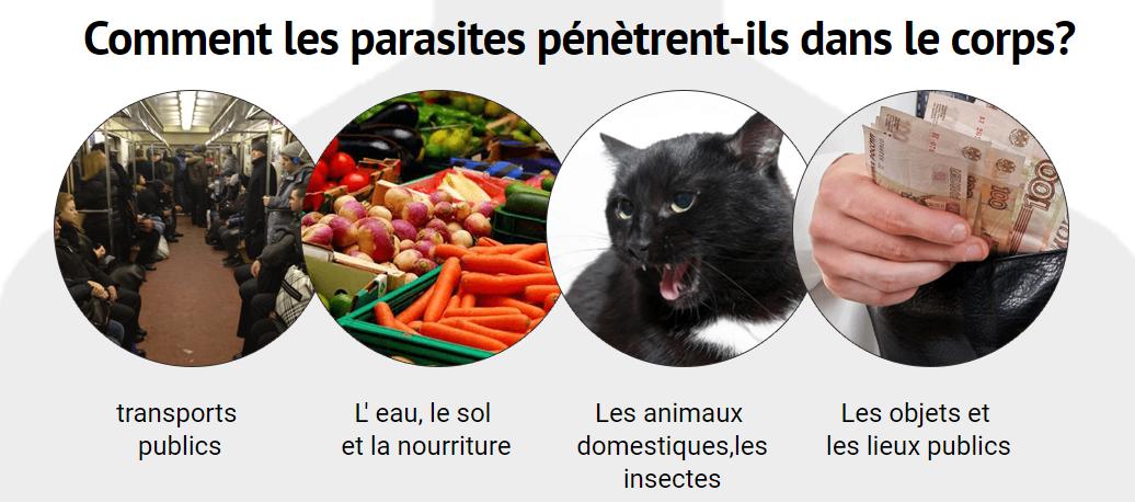 Les ingrédients d'un produit de parasites