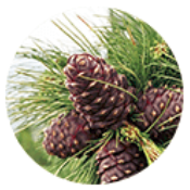BeezMaxortho cream : des composants naturels