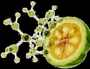 Reducelant Garcinia: des composés naturels sur-puissants
