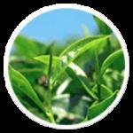 Bioxelan: Des composants sélectionnés spécialement pour la santé de votre peau