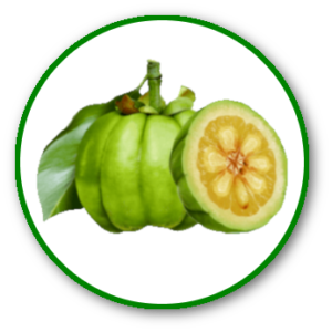 Dietonus: Des ingrédients de qualité pour une efficacité renforcée