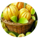 YooSlim : composition du produit minceur